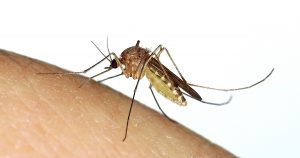 Zika Mosquito 3